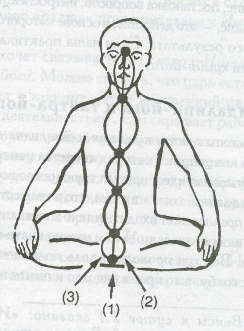 Расположение сушумна-нади(1), ида-нади(2) и пингала-нади(3), а также шести точек их пересечения, известных как чакры.