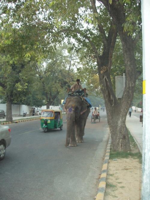 По улицам слона водили, как видно на показ...