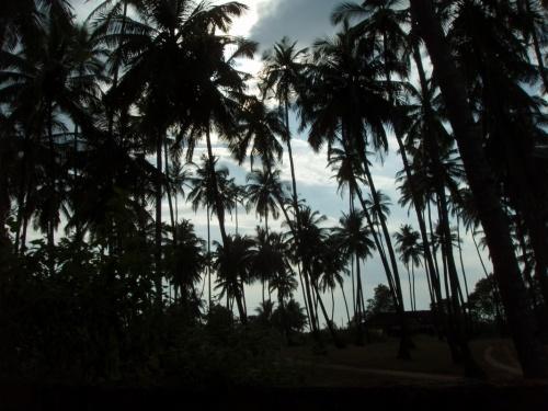 Мандрем, вечер, пальмы...