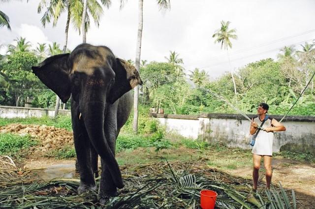 А еще там попадаются бесхозные слоны, просящие попить )