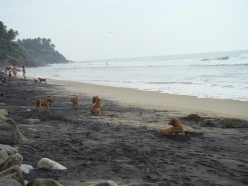 черный пляж 4 (полно собак)