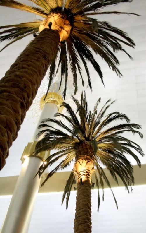 Развесистые пальмы в здании терминала 1
