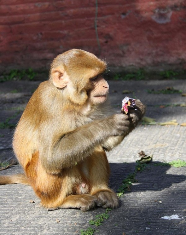 тамошние обезьяны