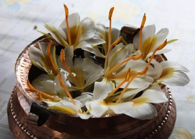 живые цветы в придорожной едальне