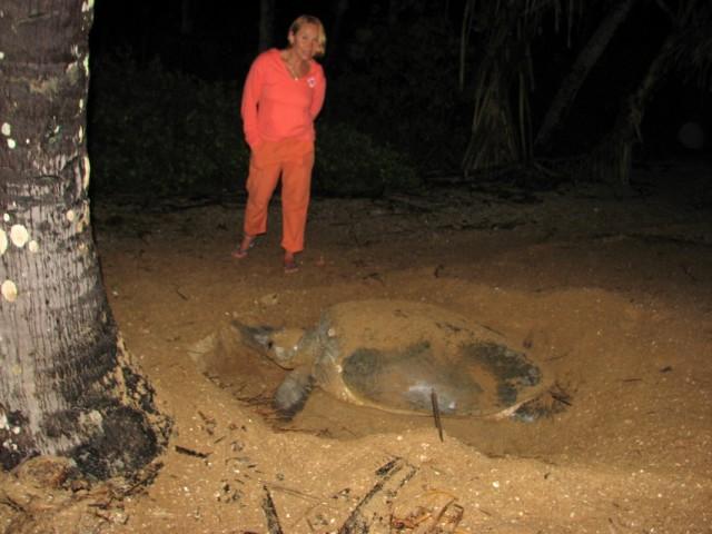 Черепаха роет яму на полтора метра вглубь. Гуманоид в красном ростом около 1,6 м.