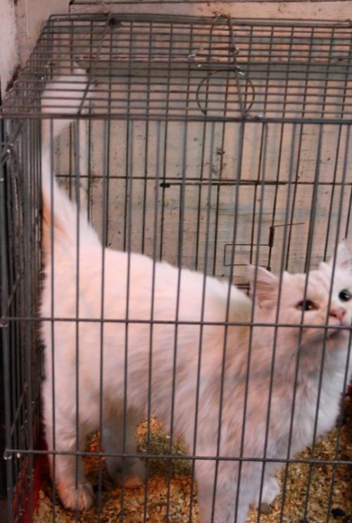 котов как у нас птиц продают в клетках