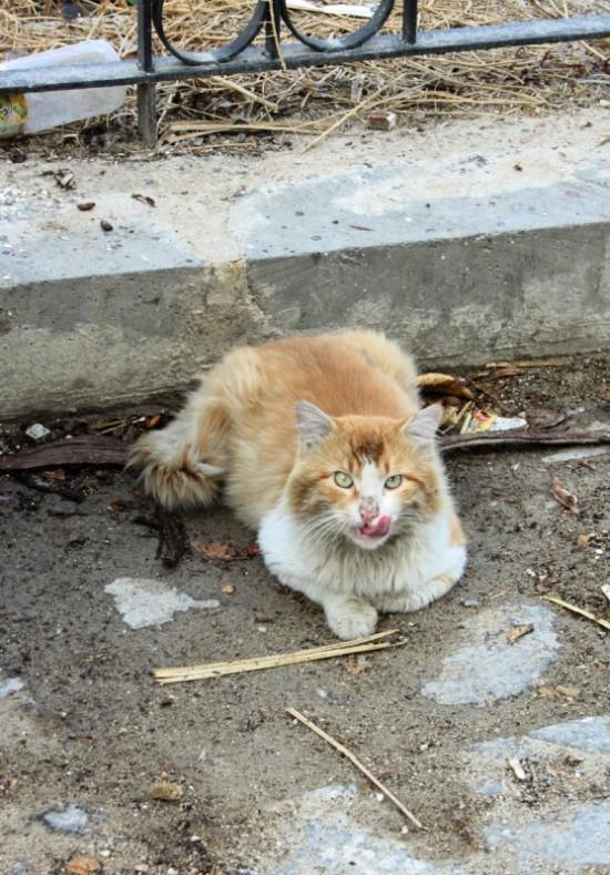 кот бандитского вида