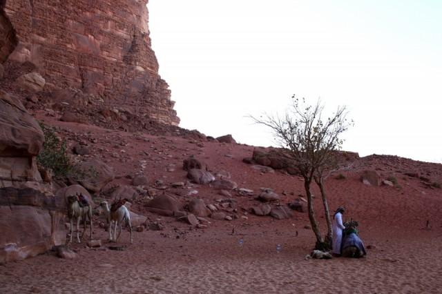 красная пустыня, песок реально красного цвета