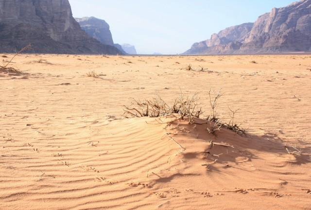 письмена следов на песке