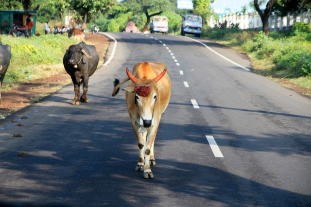 По дороге к пещерам. В Индии потрясает это стремление небогатых,а возможно и нищих людей украшать все вокруг себя.Как же не улыбаться?