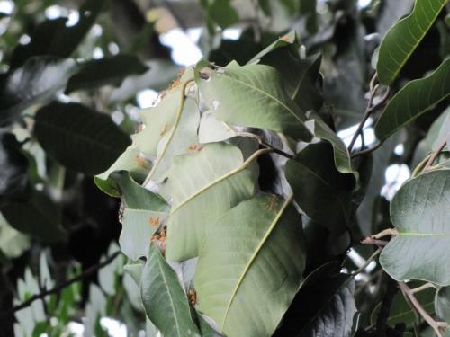 Муравьи в Тирупати