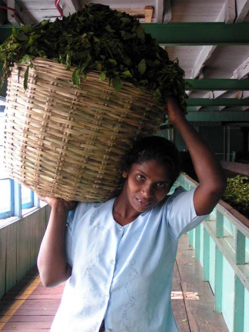 работница чайной фабрики