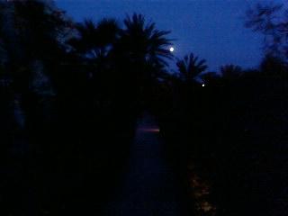 лунная ночь