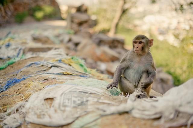 Вот так и живем, Monkey Palace