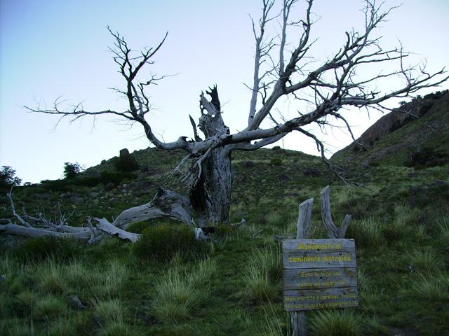 Дерево, немой укор