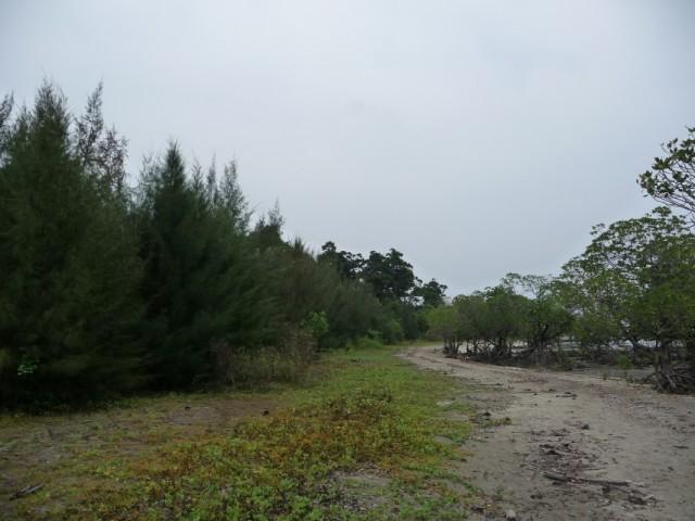 Интересная растительность. Слева хвойные, справа мангры.
