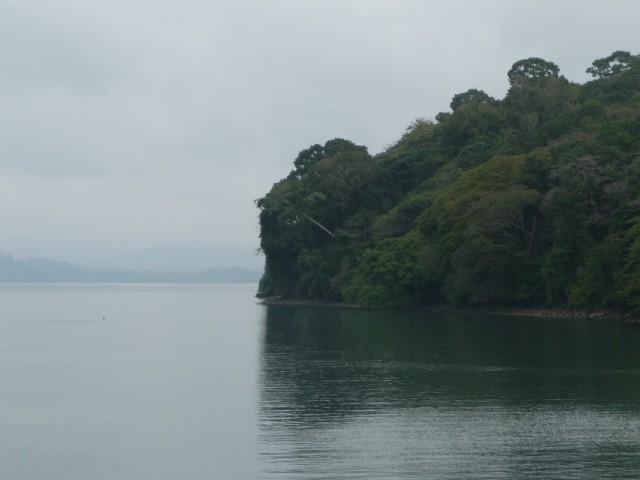 Буйство зелени Лонга