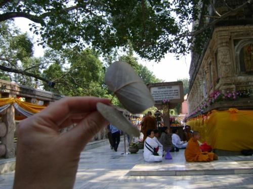 Листочки с Дерева Бодхи