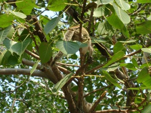 Бурундучек на священном дереве