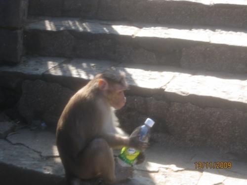 Бутылку воды купил мой гид, обезьянка у него украла из рук, открыла и стала нагло пить воду