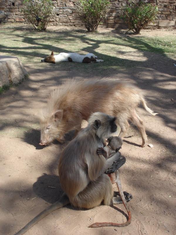 обезьяны и ко
