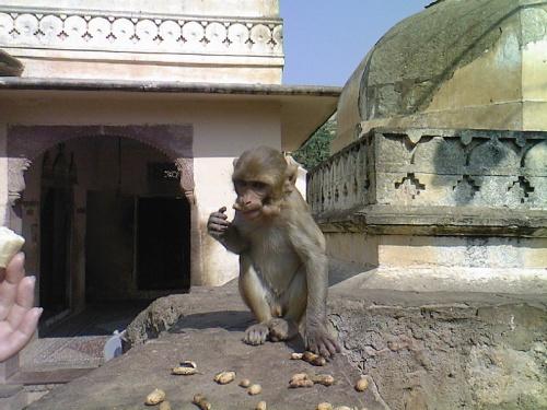 курочка по зернышку,обезьянка по орешку