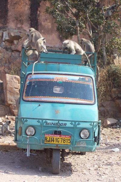 обезьяньи проделки
