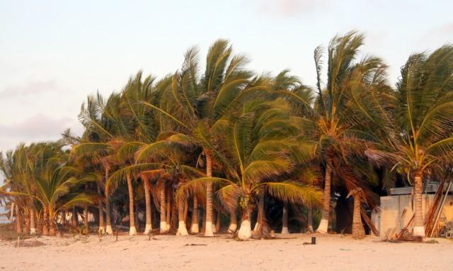 Побережье Мексиканского залива