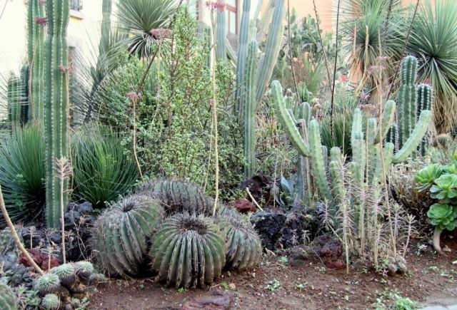 В одном из них расположен сад кактусов