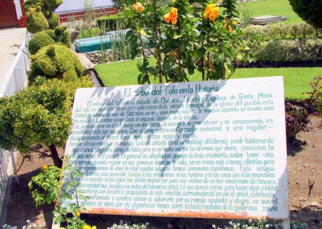 История дерева из Туле