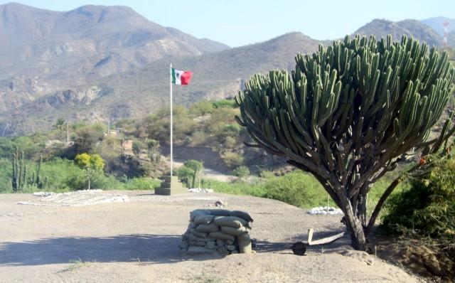 В тенечке под канделябровым кактусом