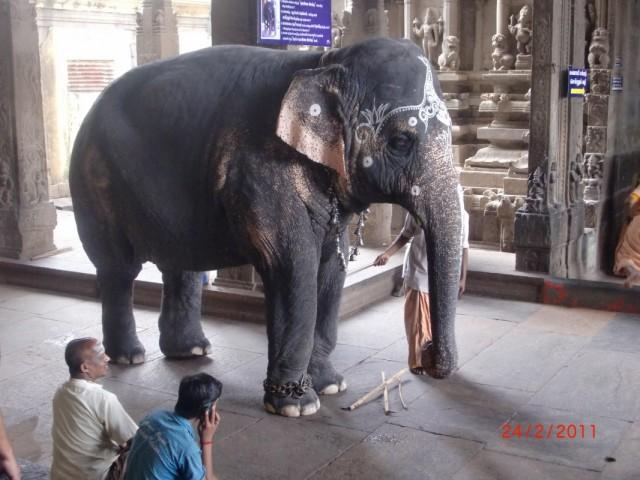 Мадураи, храмовый слон