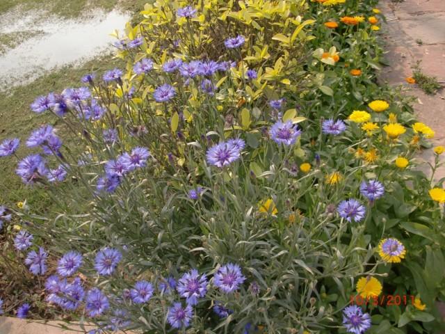 Сады Лоди 6