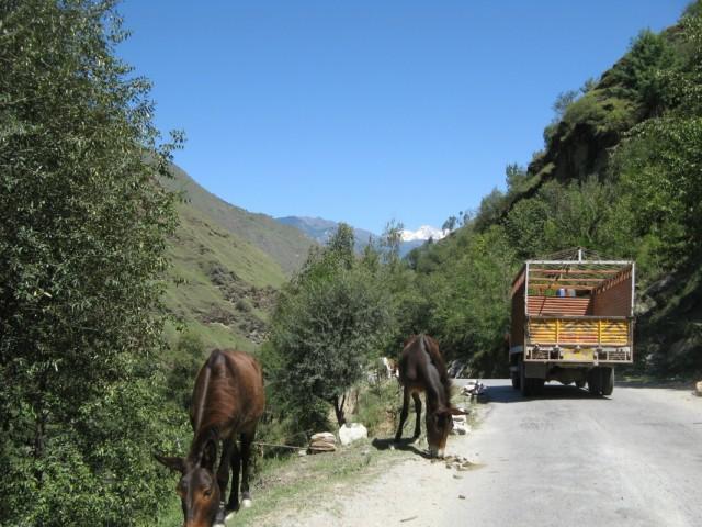 Просто кони. Долина Парвати, Химачал