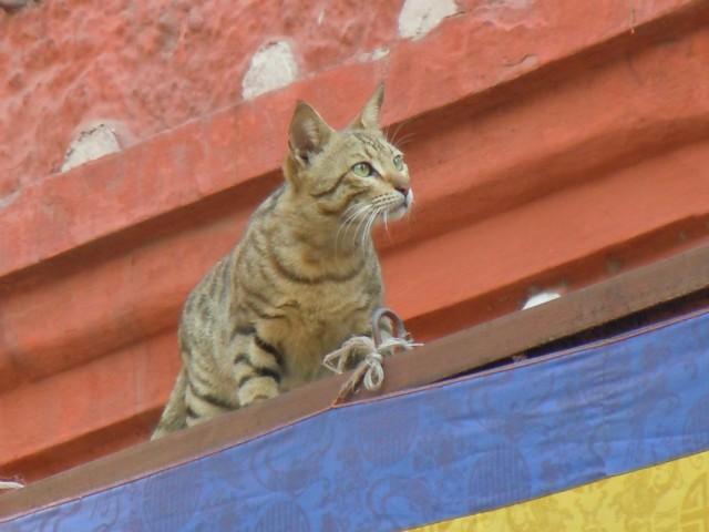 кошка на крыше храма