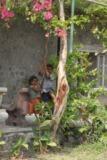 Дети на лиане