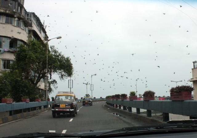 а чёрные пятнышки - это голуби