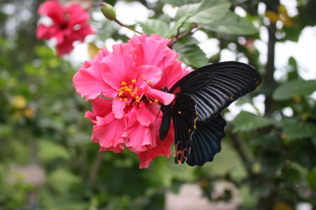 Просто бабочка