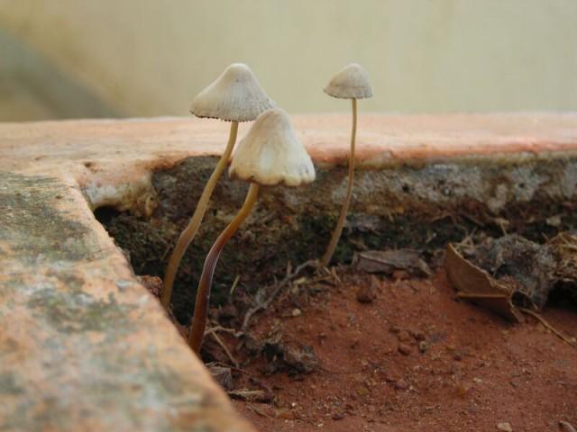 и питаясь растущими волшебными грибами))