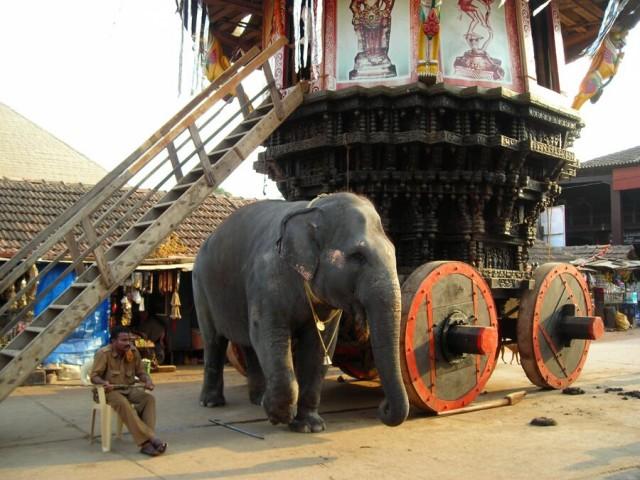добрый слон