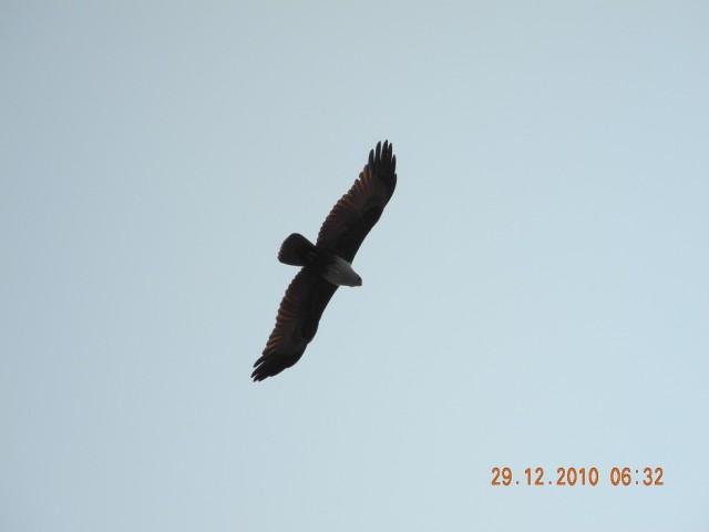 утром в гоа,вид на небо)орёл