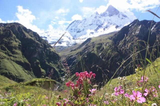 На пути к АВС альпийские луга