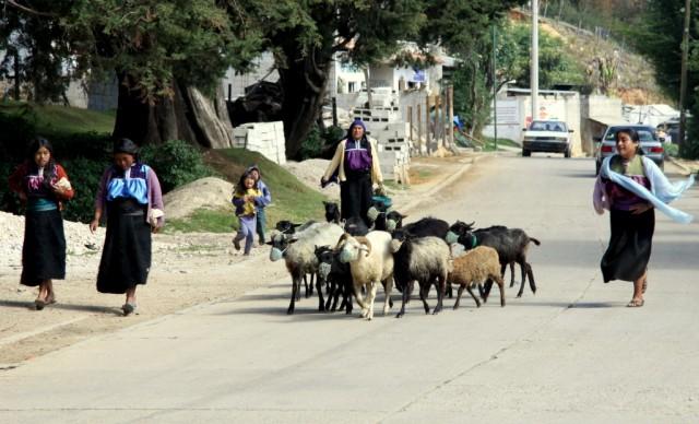 .. овечьи пастушки с прыгающими детьми