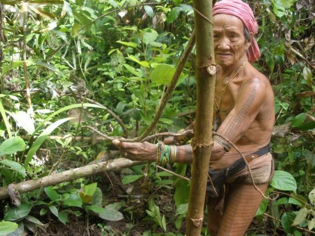 шаман ищет компоненты для яда