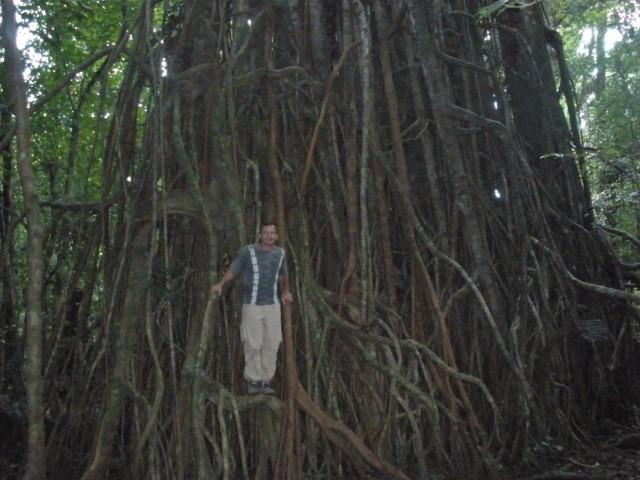 Необычные деревья на Печанге