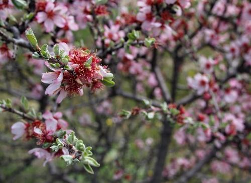 цветы из Каппы