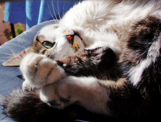 """Усы-Лапы-Хвост. Кошка живущая в отеле """"Emer's Cave House"""", где мы останавливались в Гёреме. Чуть было не написал """"хозяйская"""", но она ни разу ни чья."""
