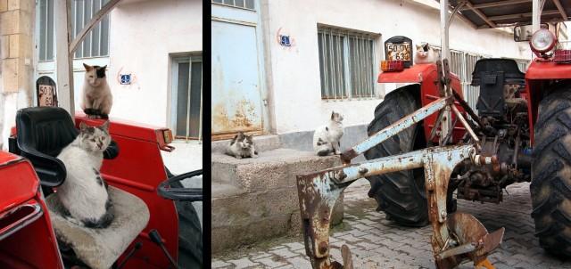 """Иногда кошки ещё играют в """"кошачьи шахматы"""", игру любимую кошками всего мира ;)"""