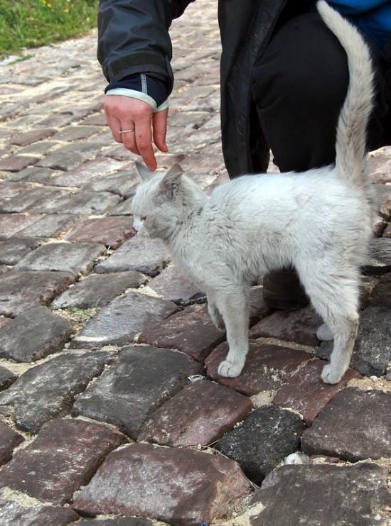 требовательный котенок