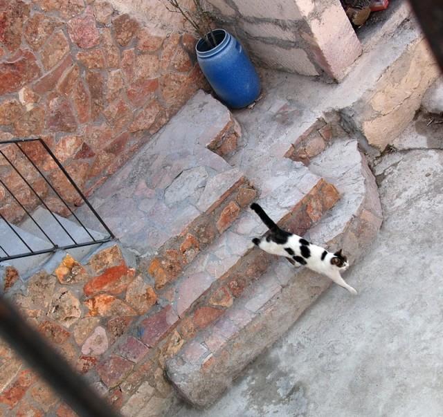 """""""хозяйская"""" очень понятливая кошка, понимает все , даже намеки"""